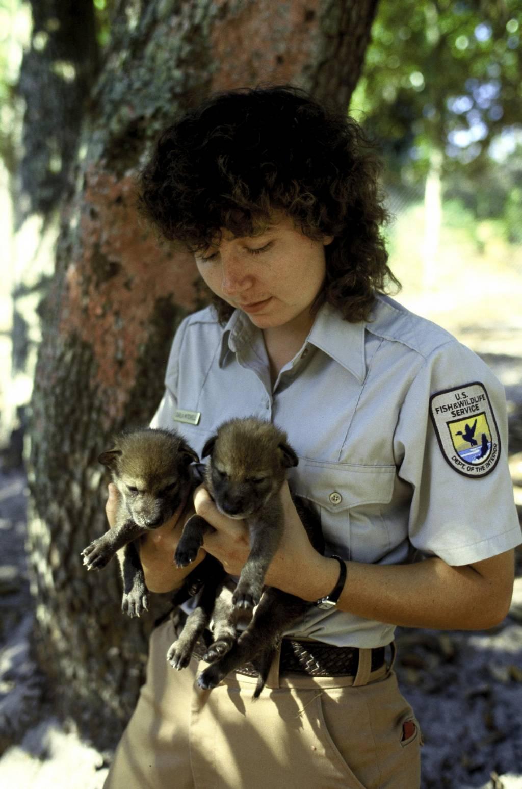 Endangering captive exotic cats essay