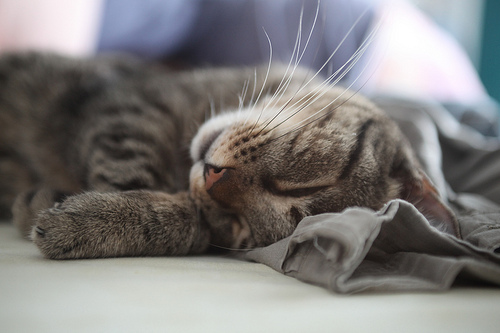 Research buying a house