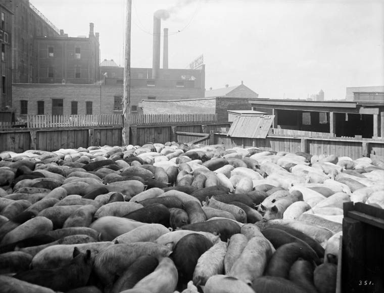 meat packing industry essay Adulteration exhibited in the meat packing industry in the early 1900s nonetheless, unsanitary conditions are best described in the section of the novel where sinclair.