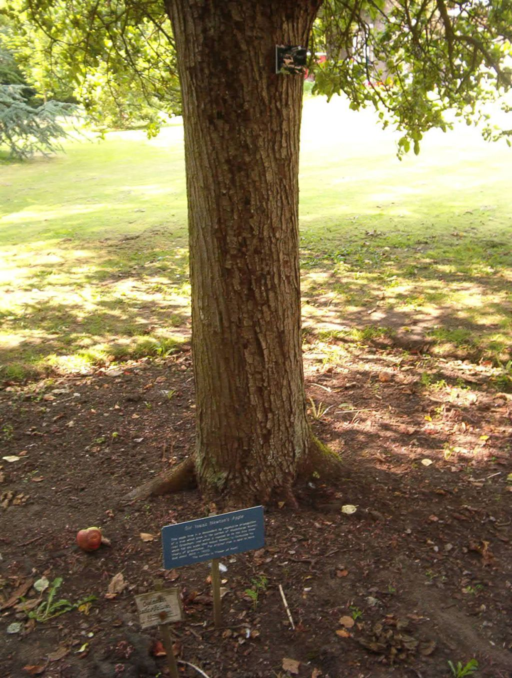 issac newton biography writework an apple tree that is reportedly a descendent of the tree that inspired isaac newton to