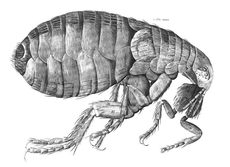 Robert Hooke, Britain's Leonardo, papers go online