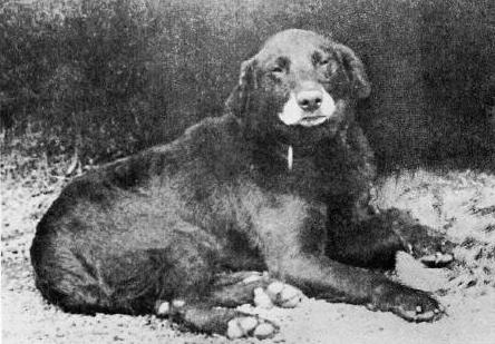 labrador dogspot