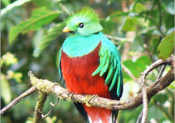 """margaret atwoods short story the resplendent quetzal essay We will write a custom essay sample on margaret atwoods' short story """"the resplendent quetzal"""" specifically for you for only $1638 $139/page."""
