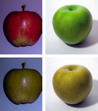 Apple diseases thesis