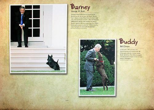 Barney my neighbourhood essay