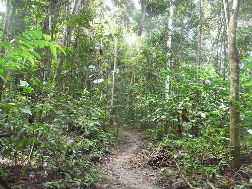 tropical islands essay