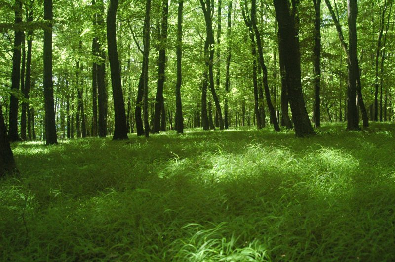 deciduous forests - an introduction to the forrests in ny