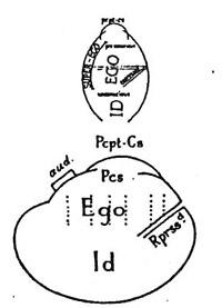 diagramma penius