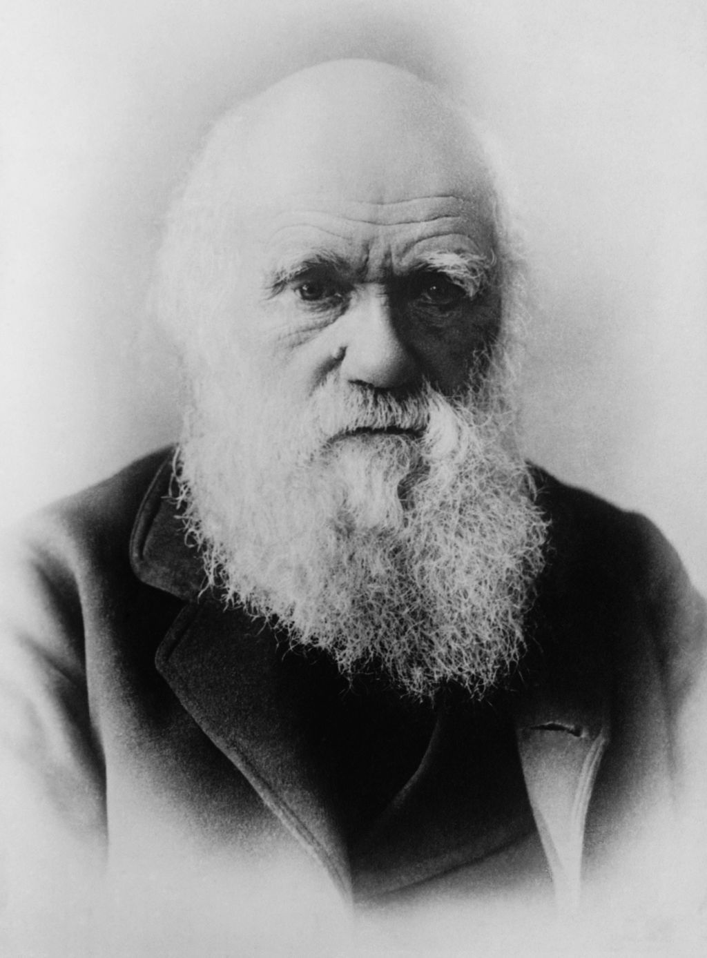 reverend brown inherit the wind writework charles darwin 1 negative glass 5 x 7 in or smaller
