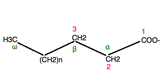 Fatty acid and essay lipids