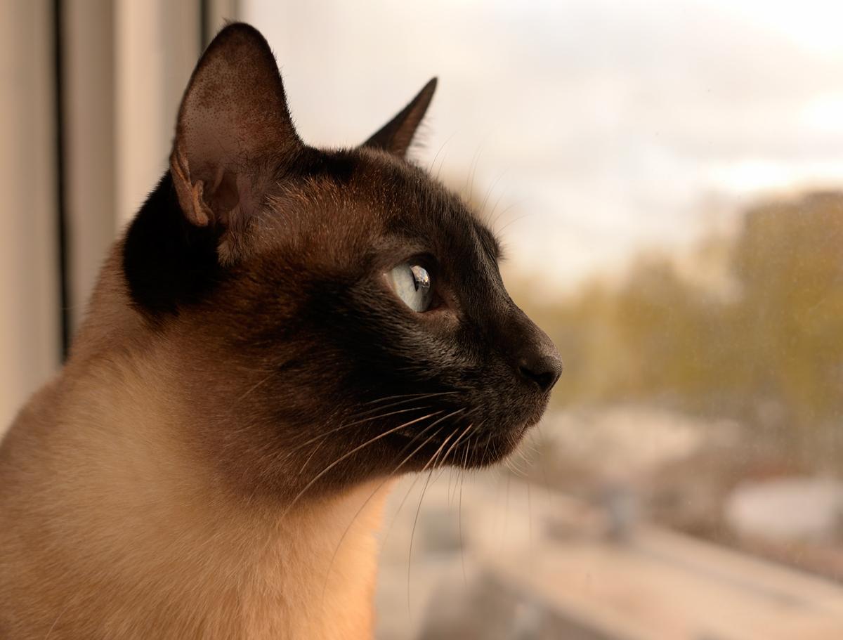 gato - photo #26