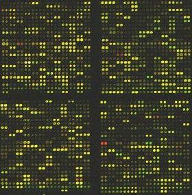 Depolarization Of The Plasma Membrane Biology Essay