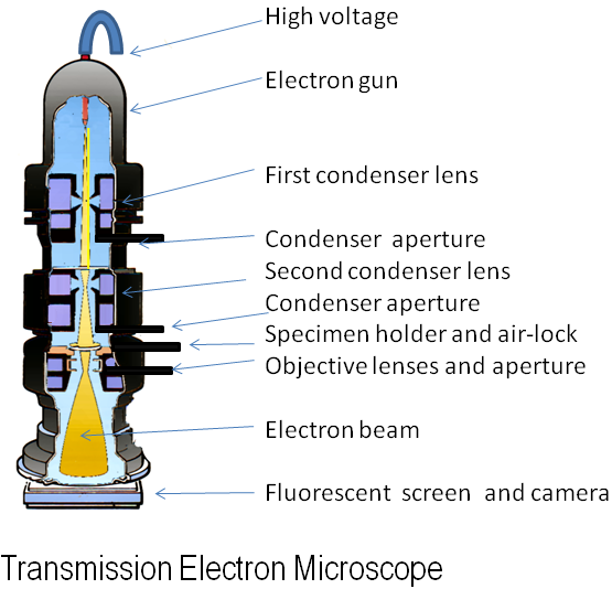 impact of light and electron microscope on cell theory essay Created by george rice, montana state university what is fluorescent microscopy a fluorescence microscope is much the same as a conventional light.