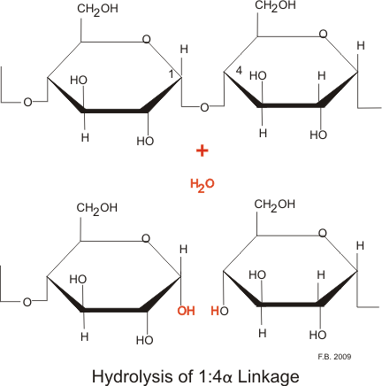 starch glycogen and cellulose essay Starch glycogen inulin cellulose pectin carbohydrates-iv polysaccharides chapter8 the small arrow shows the direction of the glycosidic bond which is always from the hemiacetal hydroxyl to some alcohol or hemiacetal group of the following sugar.