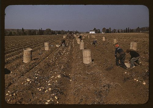 problem solution essay on child labor writework children gathering potatoes on a large farm vicinity of caribou aroostook county me
