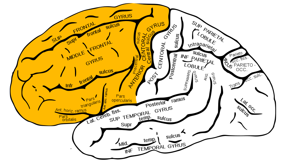 This was a report I had to do about the brain and parts of ...