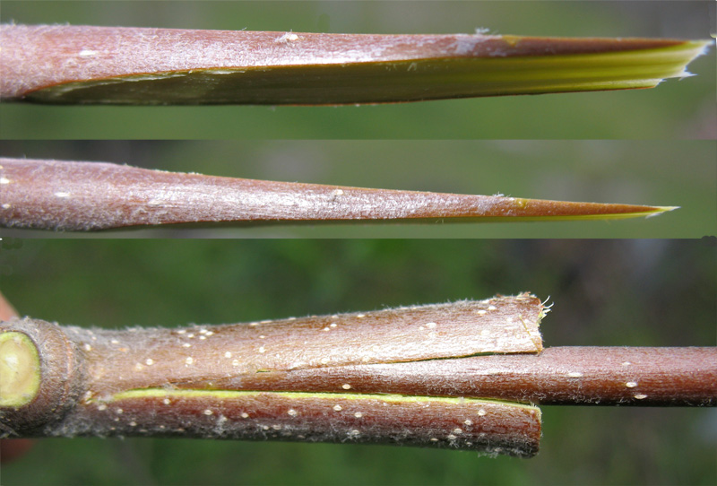 full explanation of plant propagation methods essay