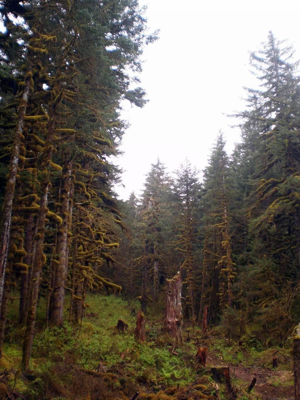 Essay about tropical rainforest