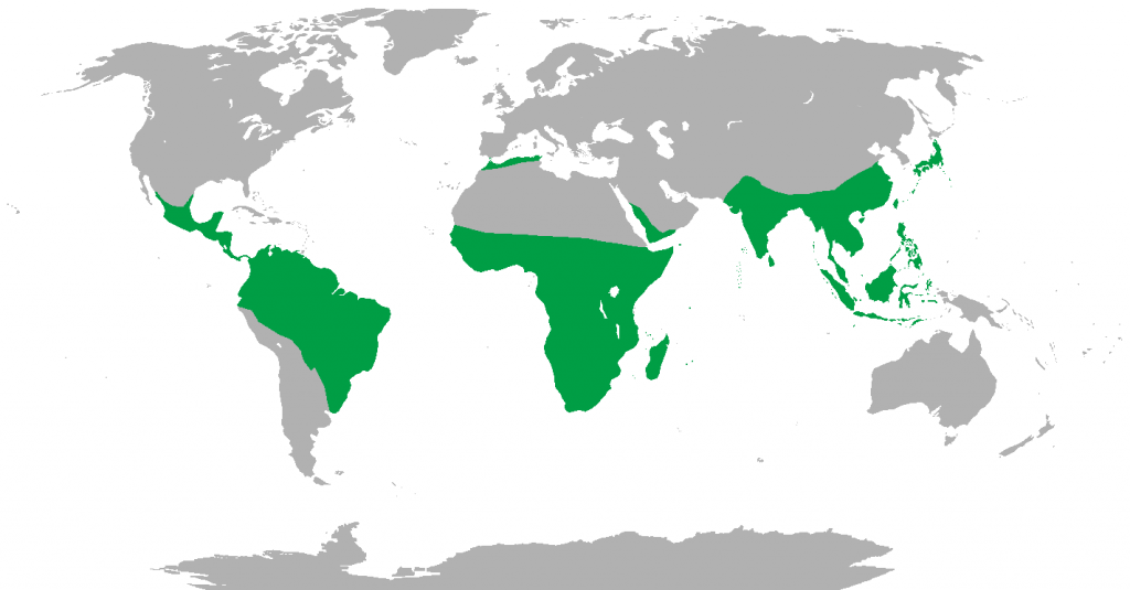 primate evolution essay Primate behavior in zoo word count: 2396  the primates that i have observed and which will be documented in this report are as follows: angolan colobus monkey .