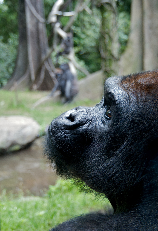 Washoe (chimpanzee)