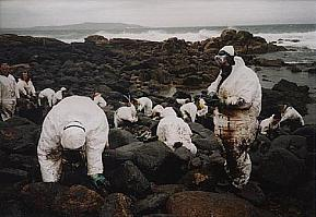 sauting the surface with oils essay During a marine oil spill, the oil can interact with and potentially wet a variety of  surfaces such as corals, skin/shells of marine animals, and bird.
