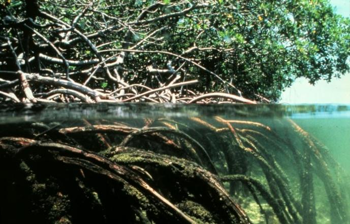 a report on the analysis of mangrove swamp vegetation To actual vegetation data (dahdouh-guebas et al bulletin de la soci t royal dynamics of vegetation an analysis using gis techniques koedam n, van ukpong ie 1995 an ordination study of mangrove swamp com- speybroeck d and ochieng c natural.