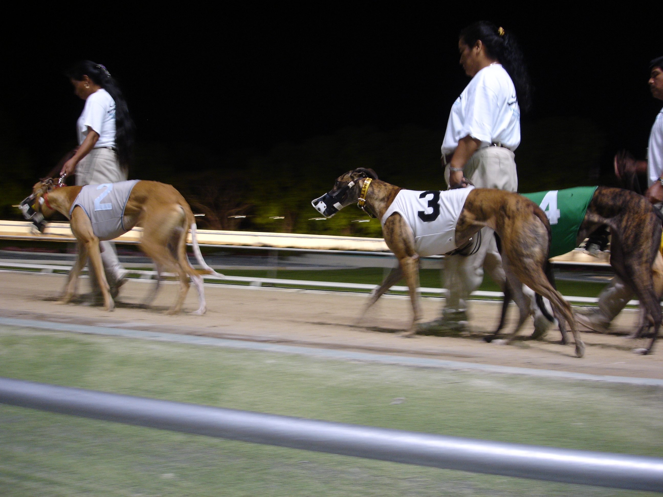 greyhound speech Greyhound racing ban: nsw is looking at the industry from the dogs' point of in the 55 years since jfk's speech, 40 us states have banned greyhound racing.