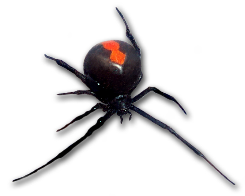 toxic animals the world of spiders essay