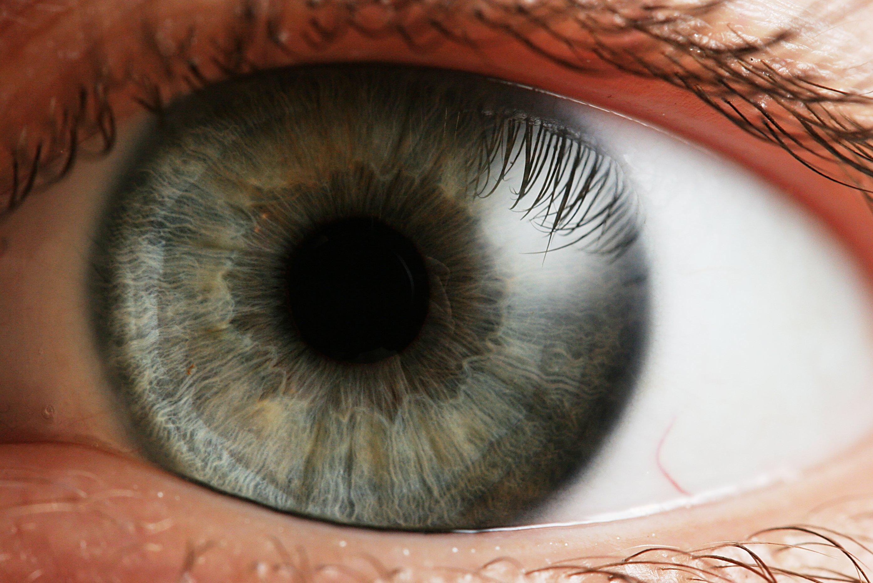 A comparison between a humans and cows eye writework human eye espaol iris de un ojo humano el ojo recibe los rayos pooptronica Gallery