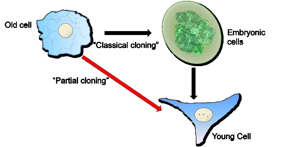 "an informative paper about the procedures in cloning Specific purpose: today i'm going to inform you about ""cloning technology and stem cell research"" - cloning informative speech introduction attention getter: imagine yourself dying from heart disease or liver failure, and the only way to live was to have an exact clone of your heart or liver."