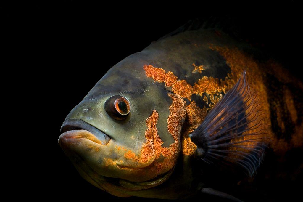 the fish by elizabeth bishop