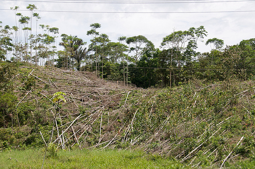 the consequences of deforestation on the environment