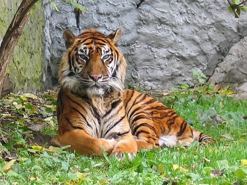 Aunt Jennifer's Tigers - Poem by Adrienne Rich