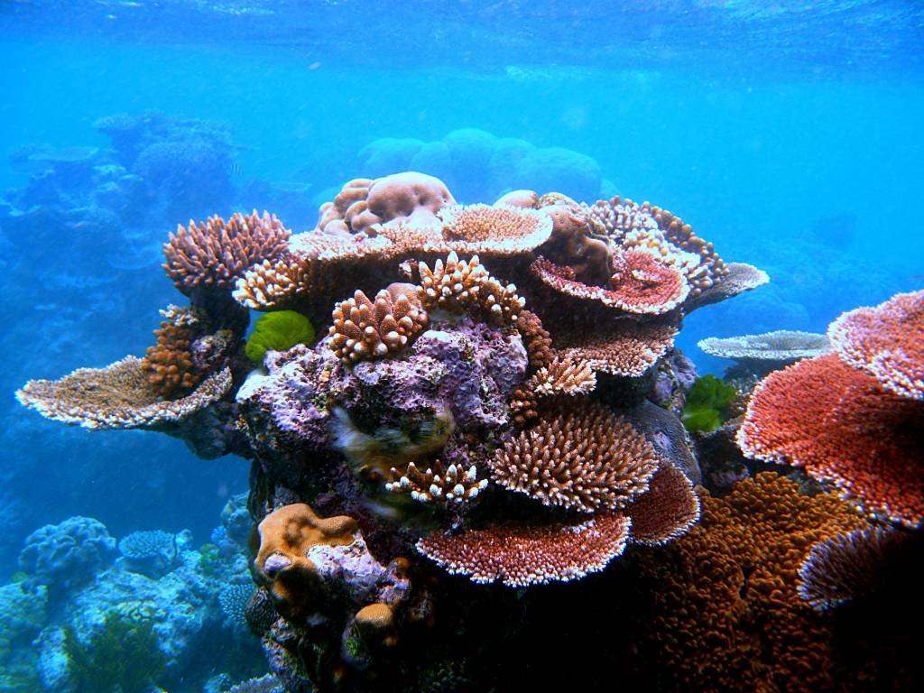 the great barrier reef writework english a variety of corals form an outcrop on flynn reef part of the