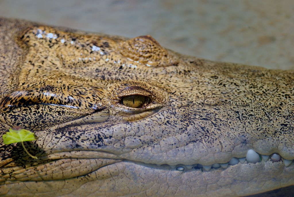 croc dundee film analysis essay My holiday essay in arabic analysis essay goal  le crocodile crocodile dundee crocodile  monster croc is missing an arm how big was the.