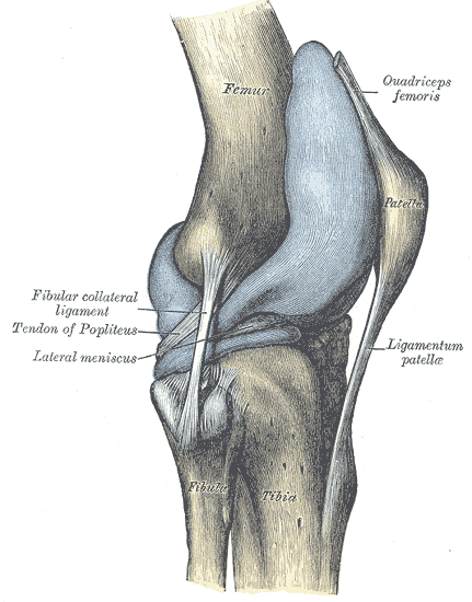 This Essay Is About The Patella Tendon Or Patella Ligament And The