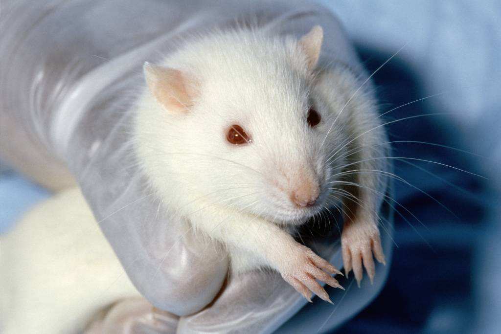 why animal testing is wrong essay