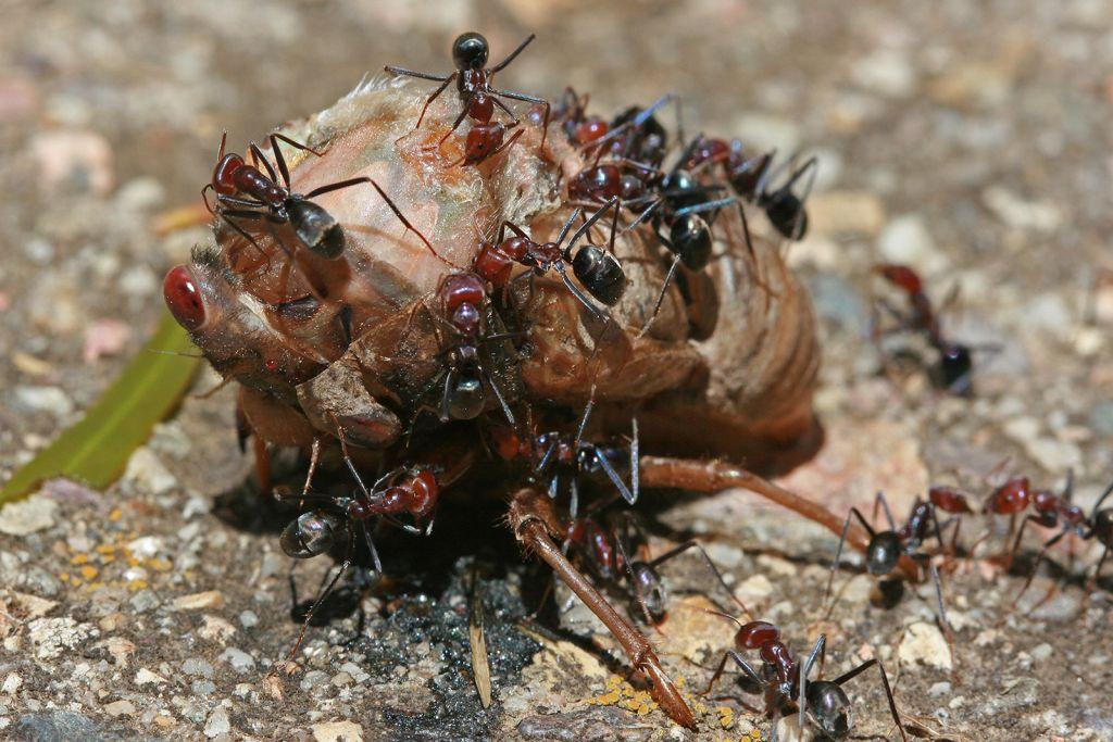 Leiningen Versus the Ants Summary
