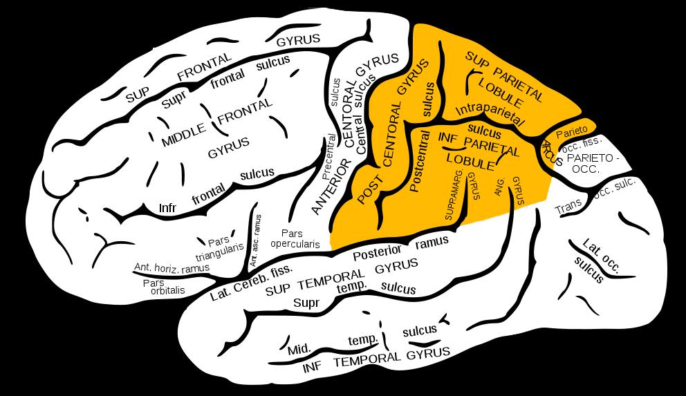 Four parts of persuasive essay