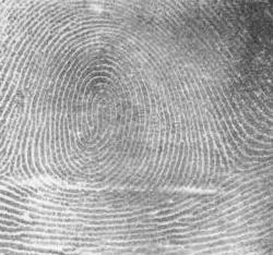 fingerprint evidence fact or fiction essay 25 surprising facts about forensic science review the top 25 facts about forensic science  long before police were collecting fingerprints for evidence, .