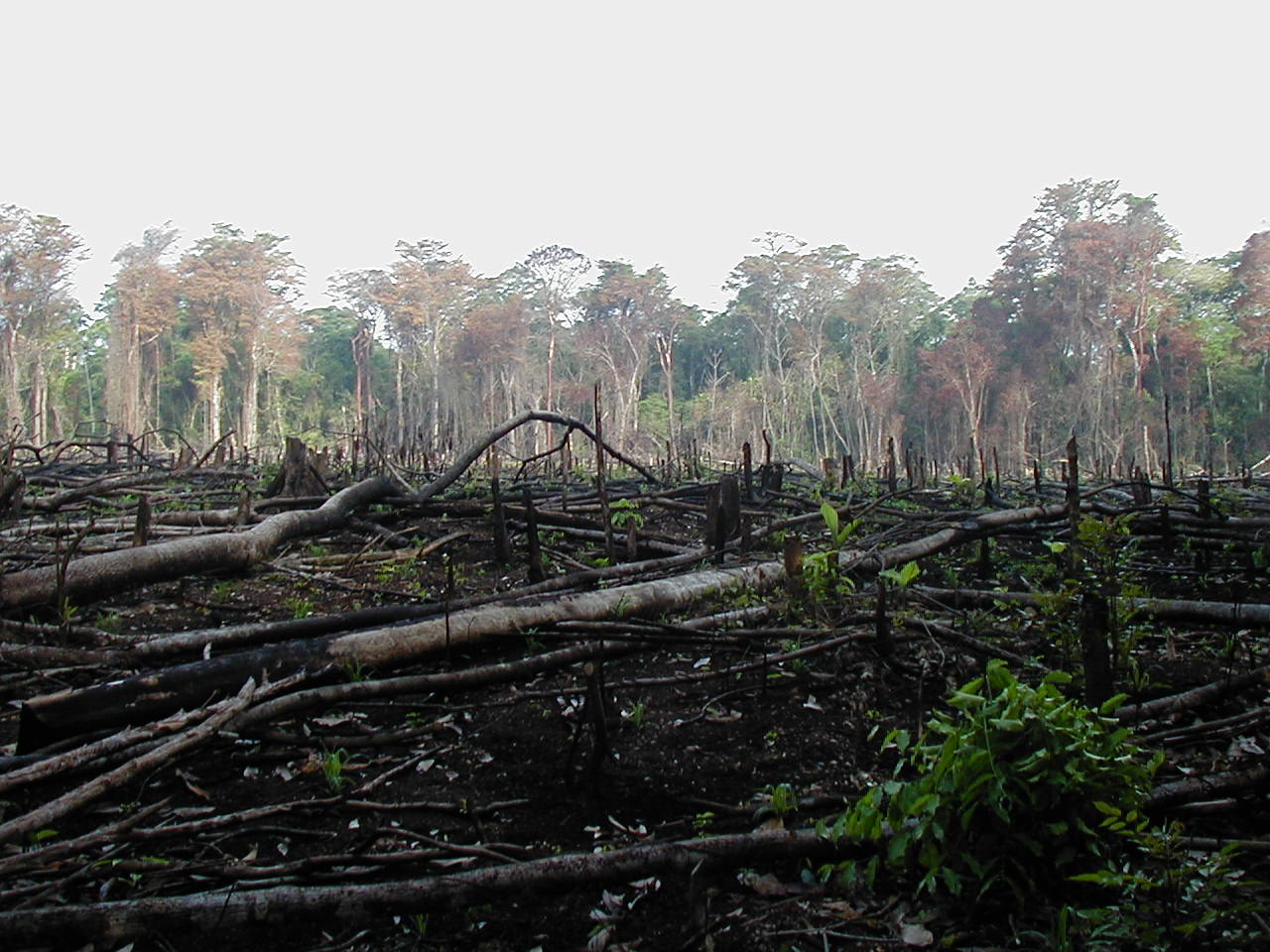 tragedy of the commons and the problem of overpopulation and jungle burned for agriculture in southern