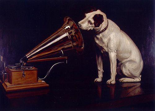 descriptive essay about a dog