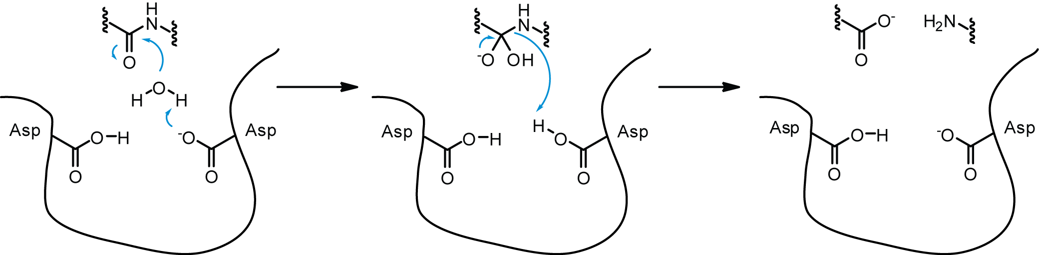 protease review