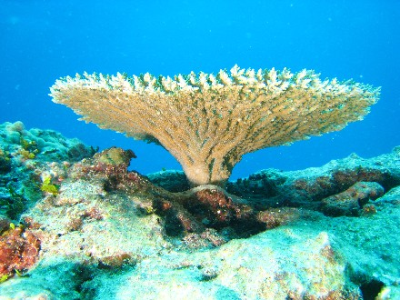 the life cycle of coral reefs essay 1) define primary productivity what factors control primary productivity and biomass in the oceans (section 129) discuss bottom-up and top-down control and why.
