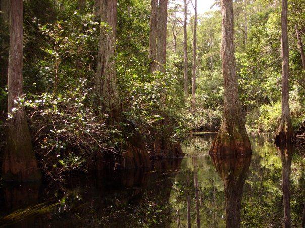 okefenokee swamp essay