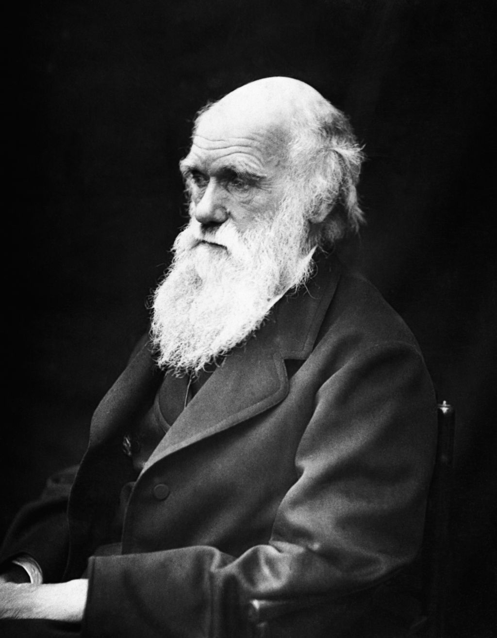 evolution reaction paper  english charles darwin 1809 1882 in his later years this image