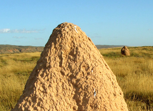 termite mounds essay View essay - essay 2 from engl 111 at central piedmont community college selection 8: sometimes we forget that nature also means us termites build mounds we build.