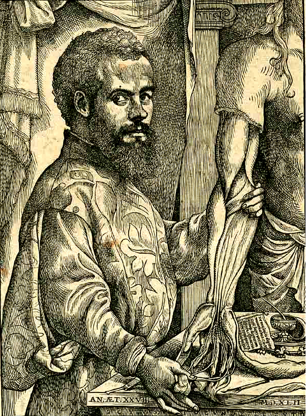 Andreas Vesalius - Father of Modern Anatomy - WriteWork