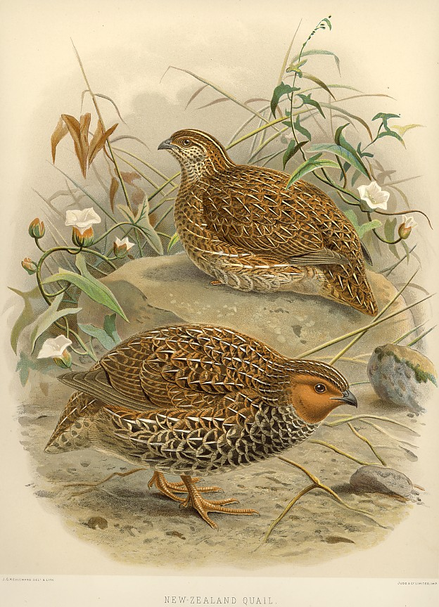 quail populations of the south essay